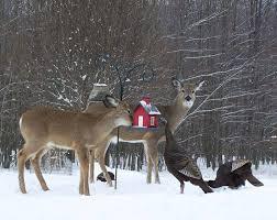 As 25 melhores ideias de Deer feeder parts no Pinterest
