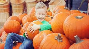 Largest Pumpkin Ever by Life Cycle Of A Pumpkin For Kids Youtube
