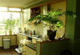 Cheap Ideas For Kitchen Decorating Large Green House Plants
