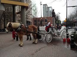 Halloween Express Northlake Mall Charlotte Nc by Horse Carriage Rides Uptown Mom About Charlotte