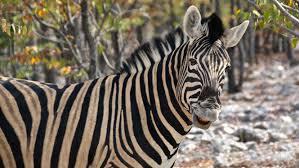 Gratis Cute Dibujado A Mano Animales Zoológicos Vector De Fondo