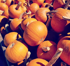 Best Pumpkin Patches Indianapolis by Russell Farms Pumpkin Patch