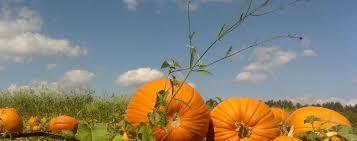 Pumpkin Patch Near Greenville Nc by Pumpkin Patch Event Venue Dream Field Farms Fitzpatrick Al