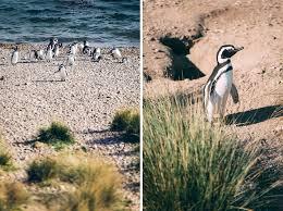 100 penguin random house desk copies new book documents