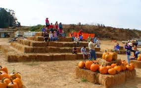 Pumpkin Patch Santa Rosa by Spring Hill Jersey Cheese