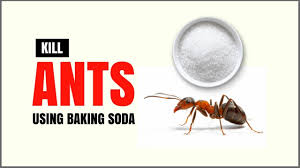 How to Get Rid Ants Naturally With Baking Soda – Ant Killer