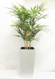 entretien des bambous en pot entretien des bambous en pot 28 images grands pots et