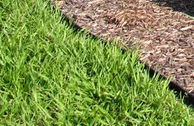 Carpet Grass Florida by Which Type Of Grass Should I Plant In Orlando