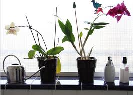 Pot Plants For The Bathroom by Bathroom Plants 10 All Time Favorites Bob Vila