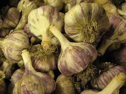 growing gourmet garlic part 2 choosing which bulbs to plant