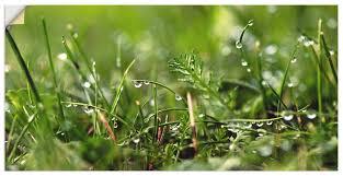 artland wandbild tautropfen gräser 1 st in vielen größen produktarten alubild outdoorbild für den außenbereich leinwandbild poster