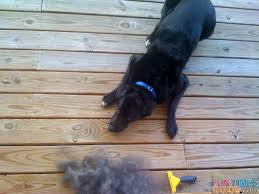 Shedding Blade Vs Furminator by Best Pet Brush See Why The Furminator Dog Brush Rocks The Dog