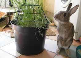 Can Bunny Rabbits Eat Pumpkin Seeds by Best 25 Rabbit Eating Ideas On Pinterest Bunny Rabbit What Can