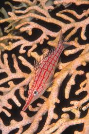Decorator Crab Tank Mates by 19 Best Fantasy Fish Tank Images On Pinterest Animals Ocean