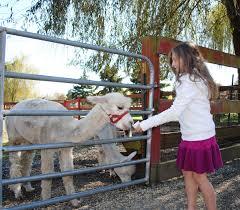 Pumpkin Picking Ct Easton by How I Met A Watusi At Silverman U0027s Farm Adorable Chaos