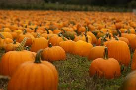 Pumpkin Patch Portland by 10 Oregon Pumpkin Patches For Hay Rides Corn Mazes And More