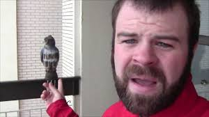 Plastic Owl Vs Pigeon - Update - YouTube 100 How To Get Rid Of Pigeons On My Roof The Loft Design Dave Keep Birds Out Birdbgone Blog 4 Ways To Of Starlings Wikihow Dairy Barns Birdfree With 3 Tips Avian Control 25 Unique Pigeon Repellent Ideas On Pinterest Obama Care Dealing Barn Farmtek Panting In Racing When Is It Normal And Not Air Rifle Hunting 6 Shooting Pigeons Pest Control Youtube Fat Cuuute Eye Spy Bird Animal Selective Breeding Deterrents Why Uv Light May Be The Answer B