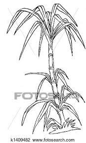 Clip Art Of Sugar Cane K1409482