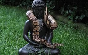 Snake On A Buddha Wallpaper