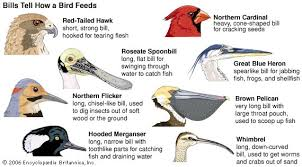 Different Types Of Wood Joints And Their Uses by Bird Importance To Man Animal Britannica Com