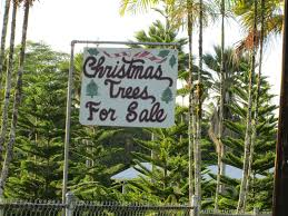 Fresh Christmas Trees Types by Family Travel Blog How To Find A