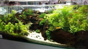 KULTUR FLORA AKUATIK: Field Trip To Aquascape Paradise, Shah Alam 329 Best Aquascape Images On Pinterest Aquarium Ideas Floratic Visiting Paradise At Shah Alam Planted Aquarium Aquascape Things Aquariums Aquascaping Malaysia Diy Pertama Kali Aquascaping October 2010 Of The Month Ikebana Aquascaping World Sumida Aquarium Reloaded Fish Tanks And Designs Awesome A Moss Experiment Its All About Current Low Tech Tank Cuisine Wonderful Small Cubical Styles Planted The Surreal Submarine Amuse