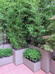 planting bamboo in a pot best 25 bamboo planter ideas on bamboo screening