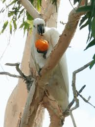 Porcupine Eating Pumpkin Gif by This Bird Playing Peekaboo Is The Cutest Thing I Have Ever Seen