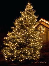tree lights outdoor amodiosflowershop