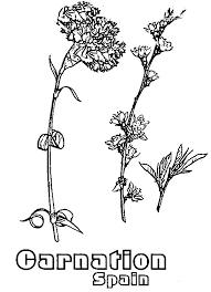 Download Color It Facebook Twitter Google Plus Reddit Linkedin Mail Spain National Carnation Flower Colouring Page