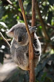 Koala Sewing Cabinets Australia by 38 Best Jorn Utzon Sydney Opera House 1956 73 Images On