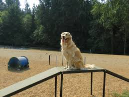 Dog Walk Ramp Folding Alinum Dog Ramps Youtube How To Build A Dog Ramp Dirt Roads And Dogs Discount Lucky 6 Ft Telescoping Ramp Rakutencom Load Your Onto Trump With For Truck N Treats Using Dogsup Pet Step For Pickup Best Pickup Allinone Pet Steps And Nearly New In Box Horfield Land Rover Accsories Dogs Uk Car Lease Pcp Pch Deals Steps Fniture The Home Depot New Bravasdogs Blog Car Release Date 2019 20