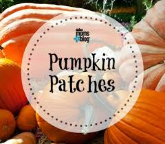 Pumpkin Patches Near Dallas Tx 2015 by Pumpkins Hayrides And Carnivals A 2017 Guide To Fall Fun In Dallas