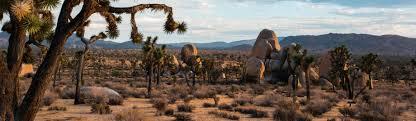 Colorado Blm Christmas Tree Permits by Joshua Tree National Park U S National Park Service