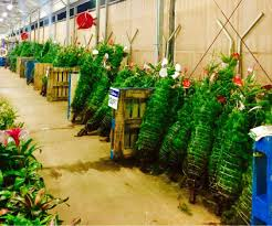 Walmart Flocked Christmas Trees Artificial by Artificial Christmas Trees For Sale At Walmart Best Images