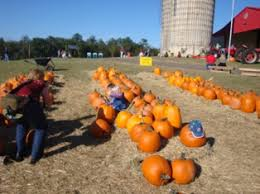 Where Did Pumpkin Patch Originate by A Visit To A Pumpkin Patch Or Corn Maze What To Expect With