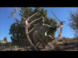 Shed Hunting Utah 2017 by 24 Best The Best Shed Hunting Videos Out There Images On