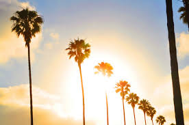 Los Angeles California Palm Trees