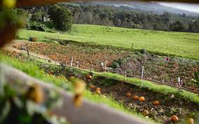 Best Atlanta Area Pumpkin Patch by The Best Pumpkin Patch On Maui Travel Leisure