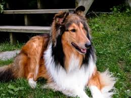 Top 10 Dogs That Dont Shed by 100 Kid Friendly Dogs That Dont Shed Best Dogs For People