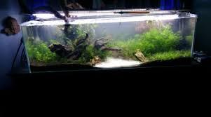 ph aquarium eau douce ph 8 même avec de l eau osmosée