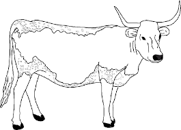Epic Cow Coloring Pages 31 For Free Colouring With
