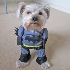 cat batman costume batman costume for or cat naturopetic