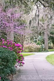 Dresser Palmer House Haunted by 685 Best Scenes From Savannah Images On Pinterest Savannah