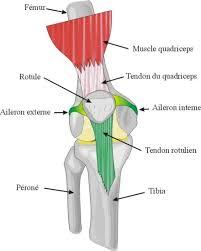 tout savoir sur les problèmes de genou u run