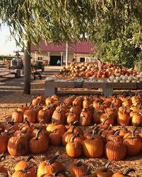 Pumpkin Patch Western Massachusetts by Best Corn Mazes And Pumpkin Patches For Fall Fun Cheapism