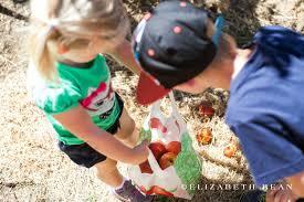 Rileys Pumpkin Patch Oak Glen by Apple Picking In Southern California Burbs2abroad