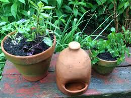 Mosquito-Proofing Your Garden | French Gardener Dishes Mosquitoproofing Your Garden French Gardener Dishes Mosquito Control Backyard Ponds Home Outdoor Decoration How To Reclaim Yard From Mosquitoes Wisconsin Mommy Mosquitoproof 0501171 Youtube Natural Proof This Year Image 59 Best Images About Dreaming Living On Pinterest 9 Ways Mosquitoproof For Summer Drainage Medium Tips Hgtvs Decorating Design Blog Hgtv