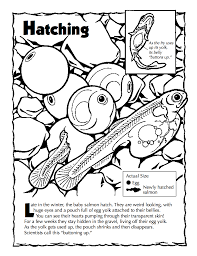 Check Out Some Of Our Other Educational Resources Around Fish And Their Fascinating Migration Fishing Education Coloring Books