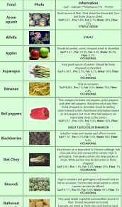 bearded dragon food chart google search amphibians daily 469x800